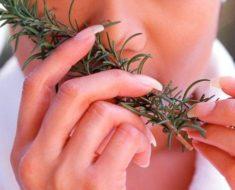 Ervas medicinais na alimentação   Dicas de Mulher